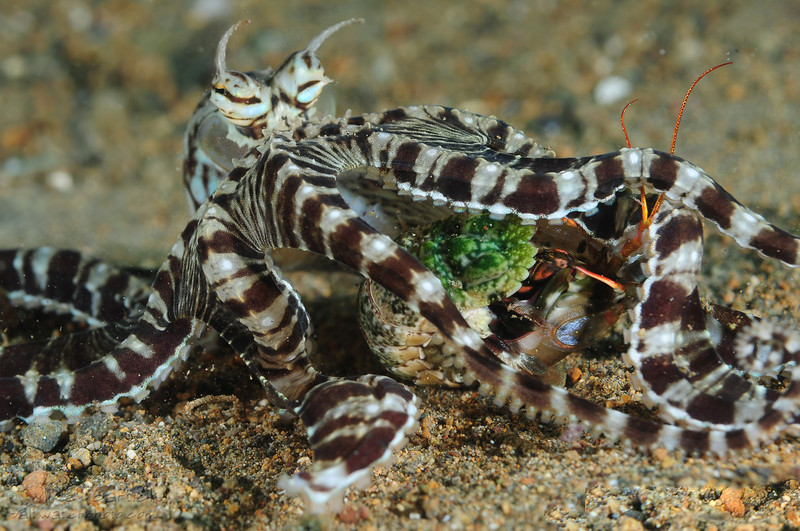 Mimic and mantis (1 of 1).jpg