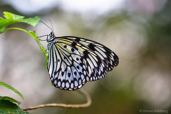 butterflies :: 2016