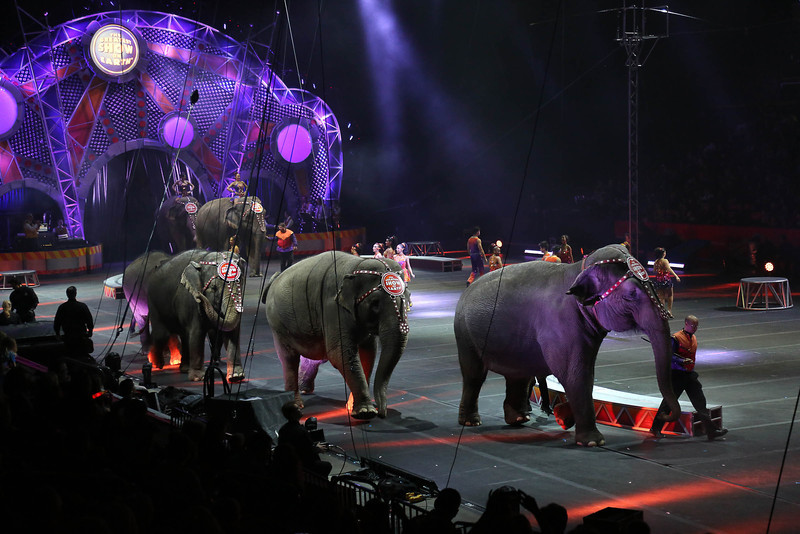 Circus_25.jpg