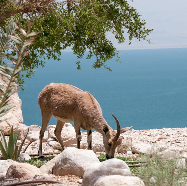 Israel_1077.jpg