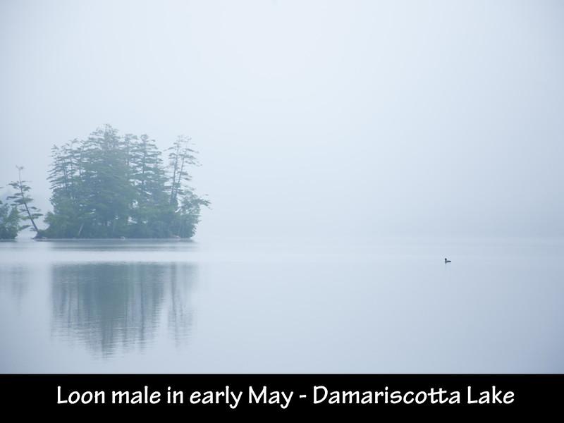 The Loons of Damariscotta Lake slides.013.jpg