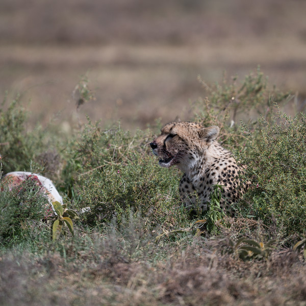 Tanzania_Feb_2018-869.jpg