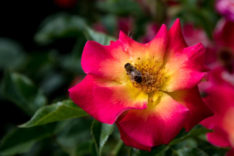 Balboa Park Flowers-1190.jpg