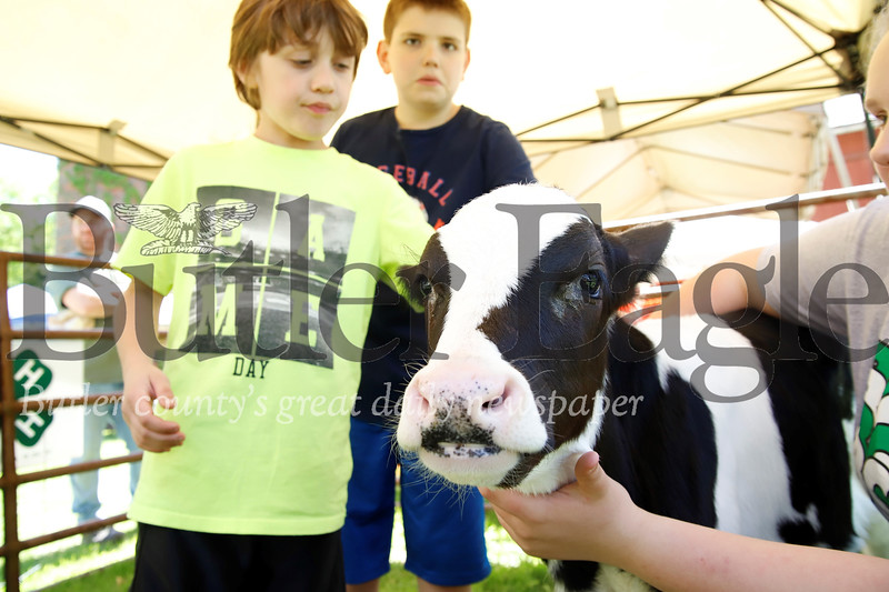 Austin Veri,10, and Austin Demek, 10, both of Gibsonia pet a 2-week  old calf. Seb Foltz/Butler Eagle