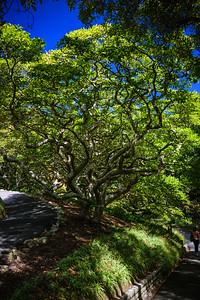 2015-03-08-New-Zealand-281.jpg