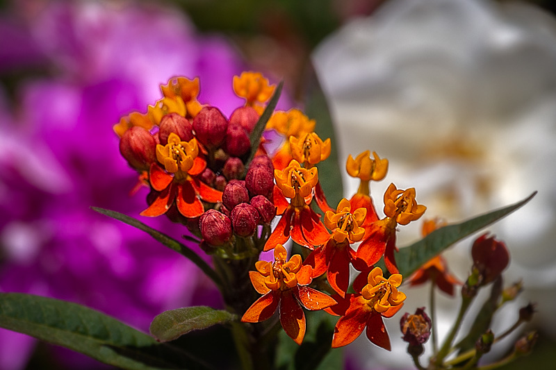 July 2 - Floral bouquet of summertime colors.jpg
