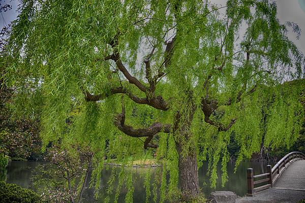 Japanese Gardens, Japan