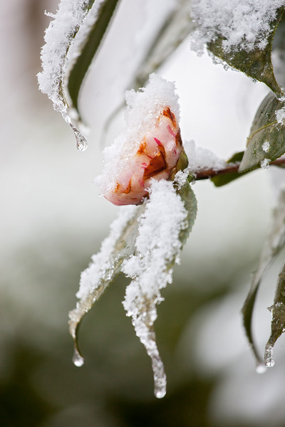 20160304 021 snow on flower.JPG