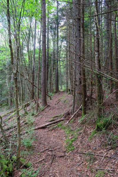 Mountains-to-Sea Trail -- 5,190'