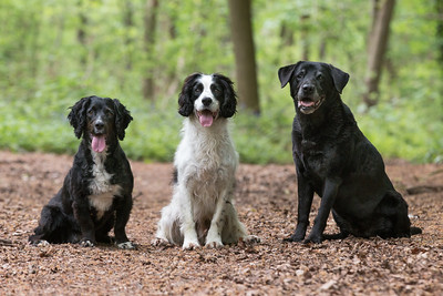 Sam, Dilly & Izzy