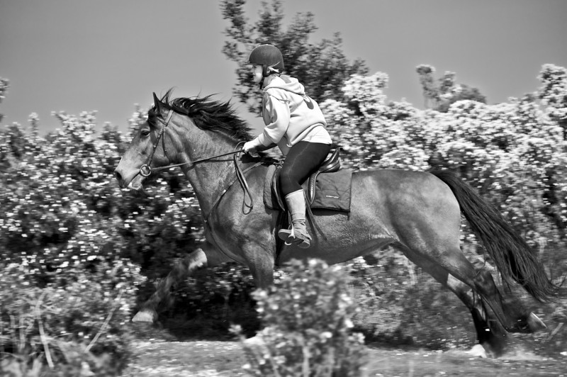 Horse Cantering By (Monochrome Conversion)