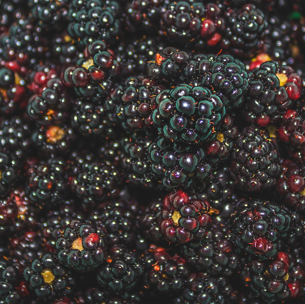 messofblackberries.jpg
