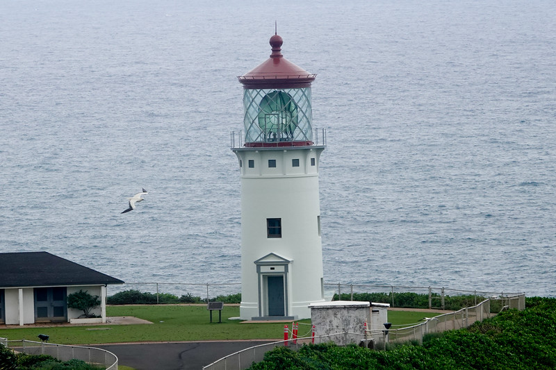 Kilauea Point is a national wildlife refuge that overlooks a historic lighthouse, and attracts many types of birds, including the Nene.
