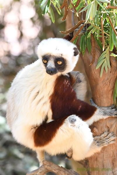 Madagascar 2017 (43)