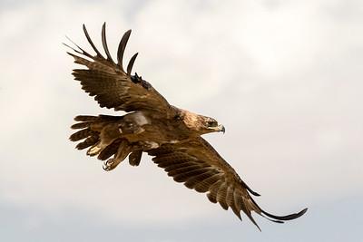 Birds - Tanzania