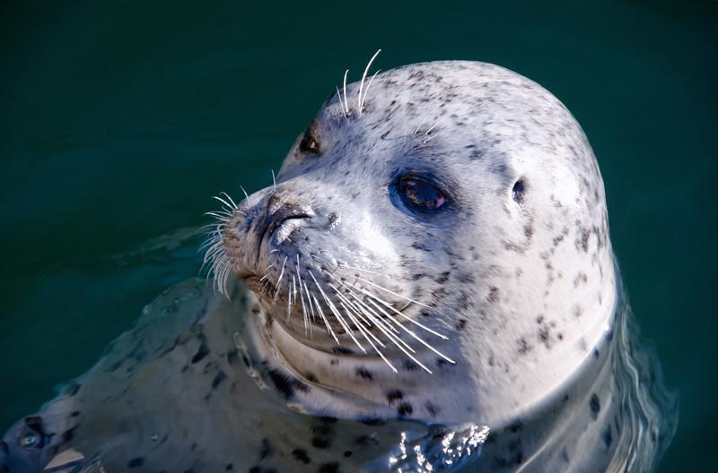 2014 November OBM Seals-1.jpg
