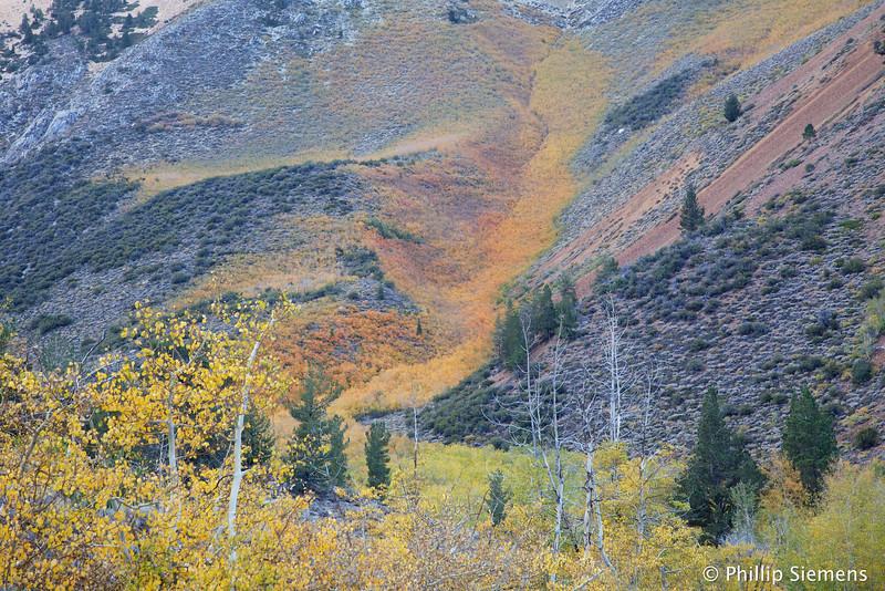 Hillside at North Lake