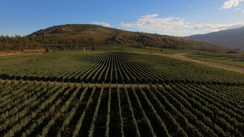 WINES OF BC BROLL6_Vineyard overview 3.mov