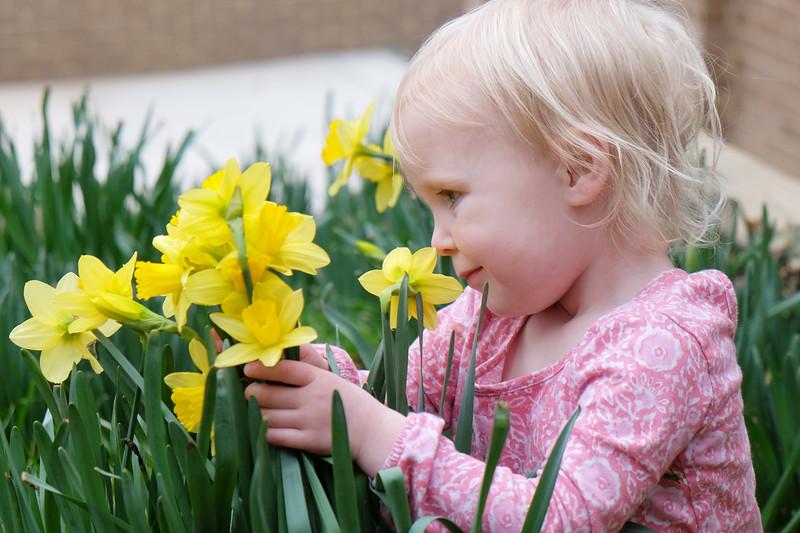 20160312 092 daffodils.JPG