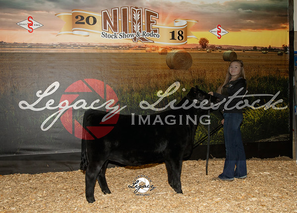 Aberdeen Futurity and Power Bull Sale