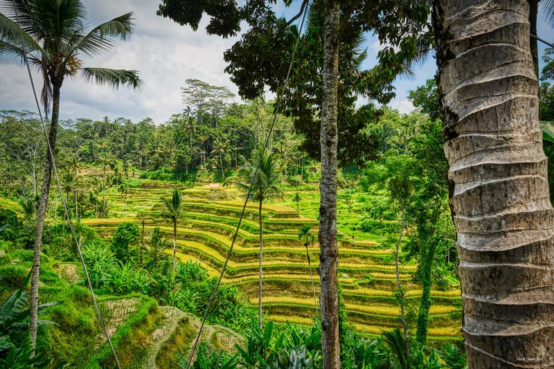 Bali1-255_AuroraHDR2019-edit.jpg