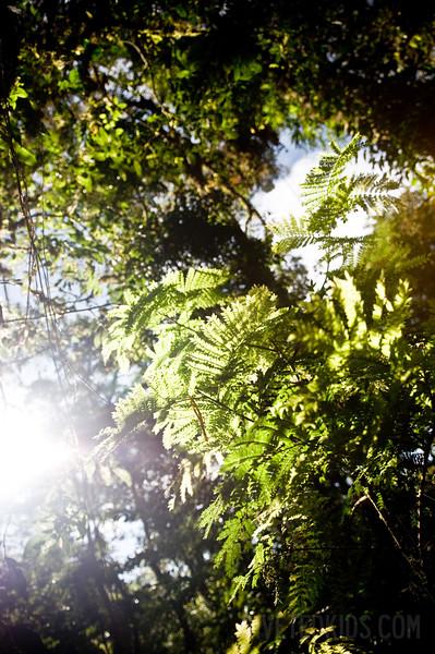 2009_01_Costa_Rica_206