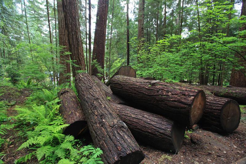 Treetops Adventure, Vancouver