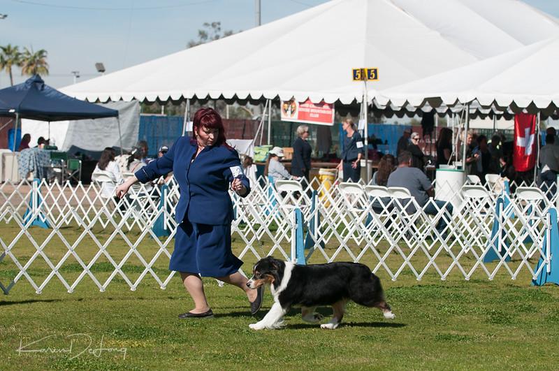 20170205_Australian Shepherds_Lost Dutchman Kennel Club-103.jpg