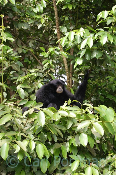 At Singapore Zoo Nov 08 (179).JPG