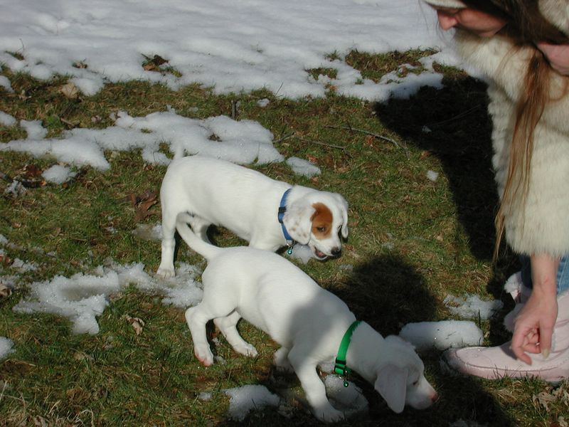 Feb 05- Puppies 012.jpg