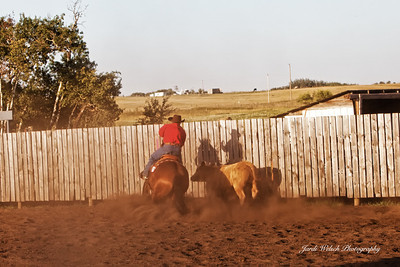 North Battleford Cow Horse