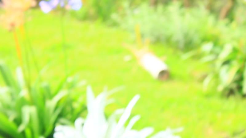 Vid colibries