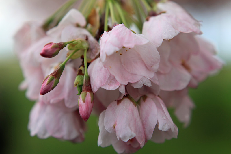 Blossoms OMG 2.jpg