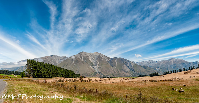 High country pasture South Island