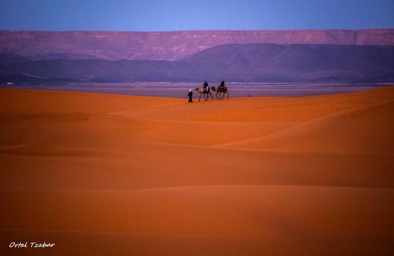 שתי רוכבות גמלים ומוביל.jpg