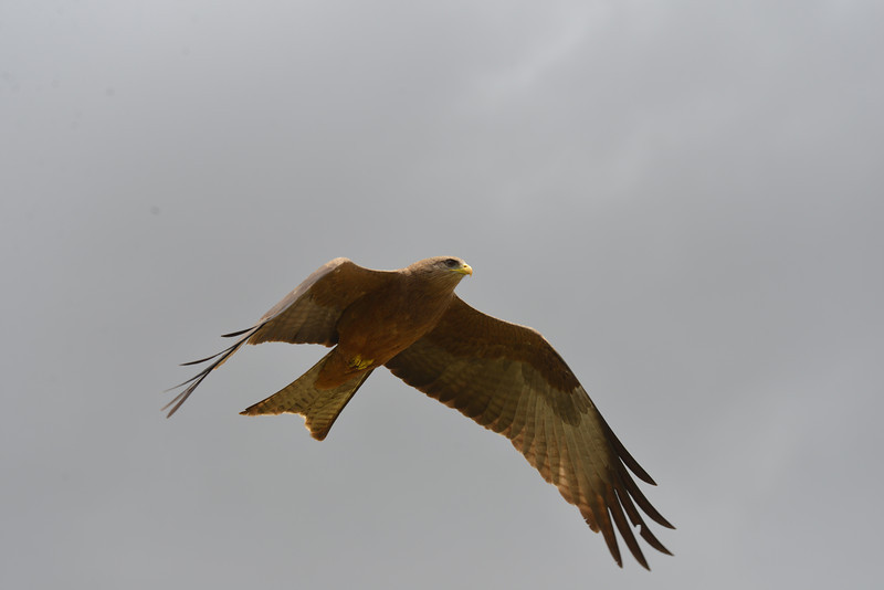 East Africa Safari 437.jpg