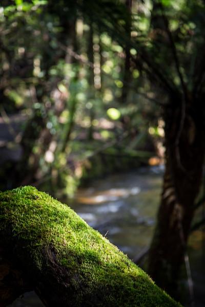 Rain Forrest at Gordon Falls.