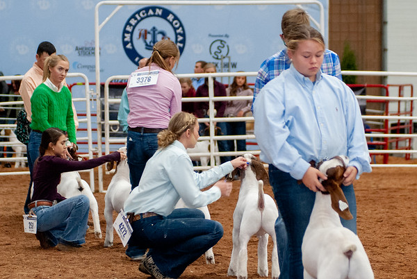 American Royal Market Goats