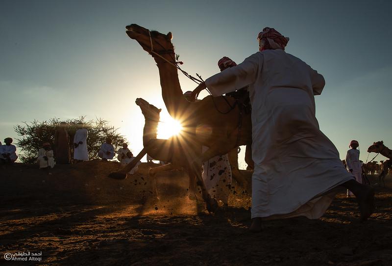 IMGL6430- Camel Race.jpg
