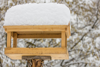 2013-02-12-Garden birds
