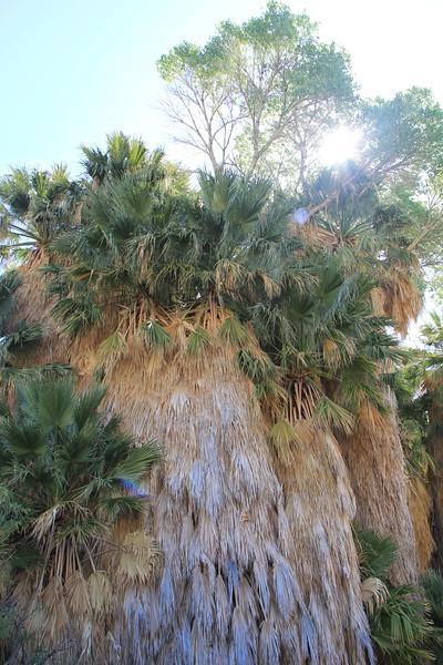 20190524-44-SoCalRCTour-Cottonwood Spring-Joshua Tree NP.JPG