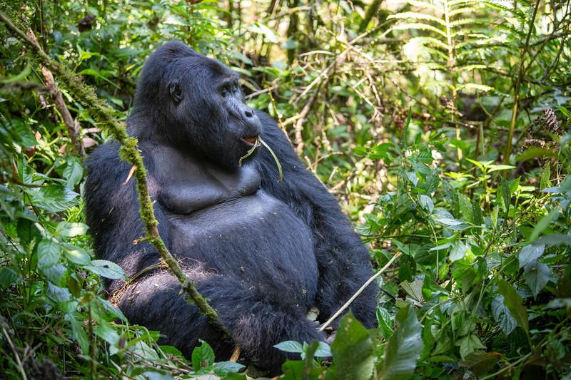 Uganda_T_Gor-339.jpg