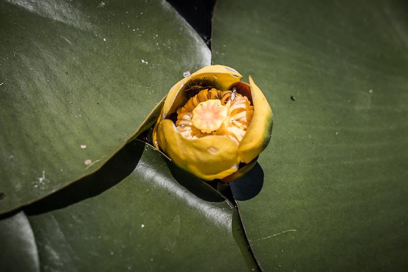 Lowes Lake-9225.jpg