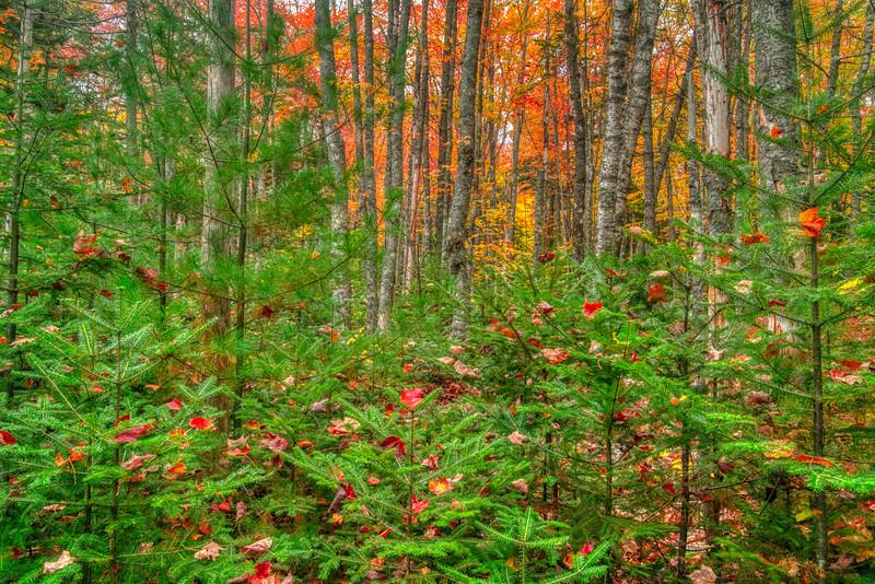 Maine Fall 2019-1.jpg