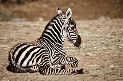 Wild & Zoo