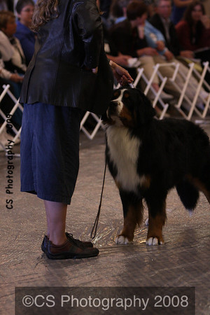 Winners Dog-BMDCA 2009