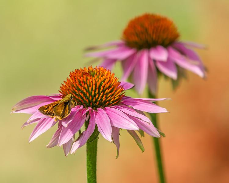 Moth and Flower 9405-.jpg