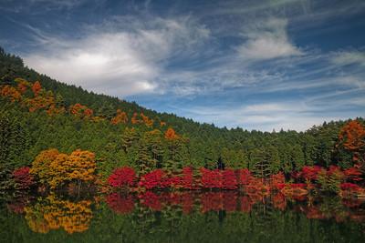 Autumn foliage 2009