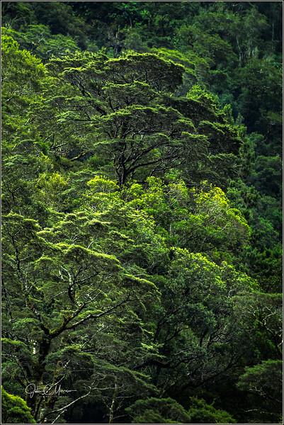 JM8_1229 Tree LPN W.jpg