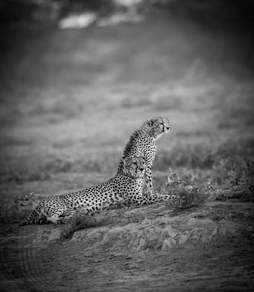 Tanzania_Feb_2018-97.jpg